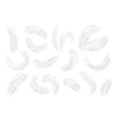 white feathers angel goose or swan realistic vector image