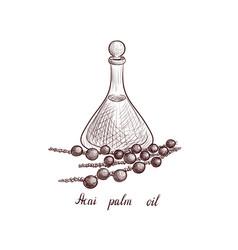 Drawing acai palm oil vector
