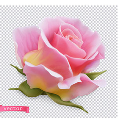 pink rose 3d realistic object vector image