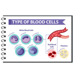 type blood cells medical information vector image