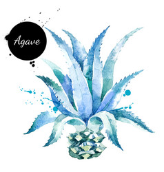 watercolor hand drawn agave plant painted sketch vector image
