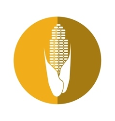 Corn cob ripe leaves icon yellow circle vector