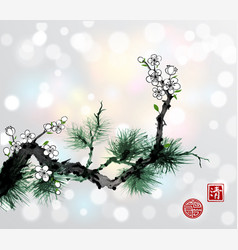 green pine tree branch and white sakura cherry vector image