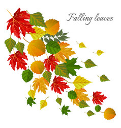 falling leaves autumn seasonal postcard with vector image