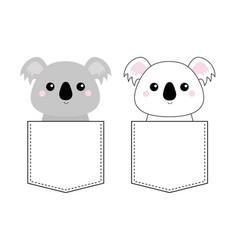koala bear set head face sitting in pocket vector image
