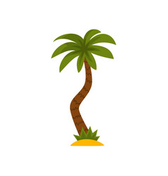 palm tree tropical evergreen plant vector image