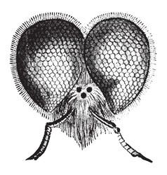 Bee head vintage vector