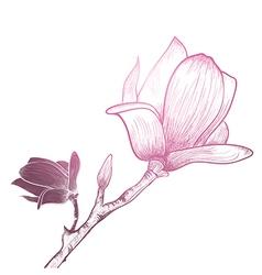 Vintage Magnolia Flower vector image vector image