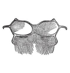 Bee abdomen vintage vector