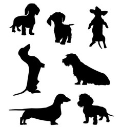dachshund-2 vector image