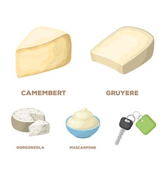 Gruyere camembert mascarpone gorgonzola vector