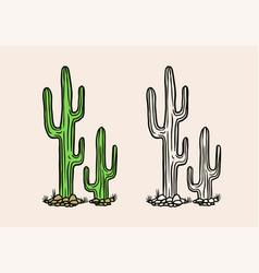 Nopal or mexican cactus tropical green plant vector