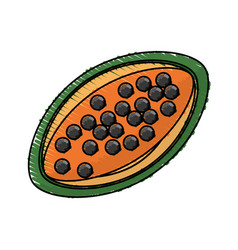 Papaya tasty fruit fresh vector
