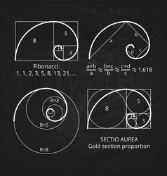 scheme of golden ratio section fibonacci spiral vector image