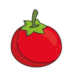 tomato vegetable food fresh vector image