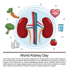 world kidney day infographic vector image