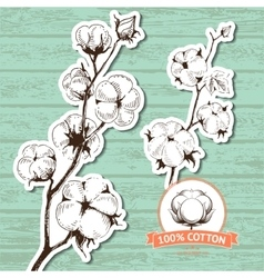 Hand drawn stems of cotton plants vector