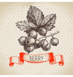 Red currants Hand drawn sketch berry vintage vector image vector image