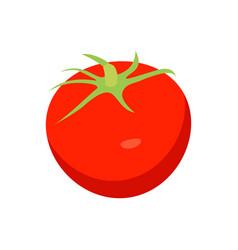 bright red tomato closeup card vector image
