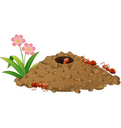 cartoon ants colony and ant hill vector image