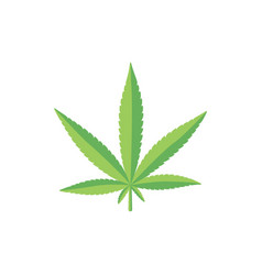 flat style fresh green cannabis marijuana leaf vector image