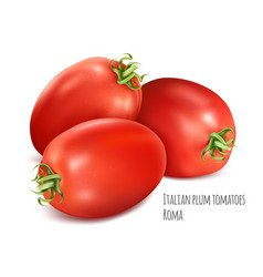 Italian plum tomatoes roma vector
