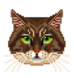 Pixel siberian cat face isolated vector