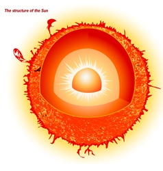 Structure of the sun vector