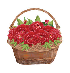 Wicker basket with peony flowers isolated vector
