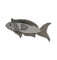fish seafood isolated vector image