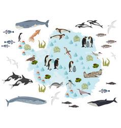Antarctic antarctica flora and fauna map flat vector