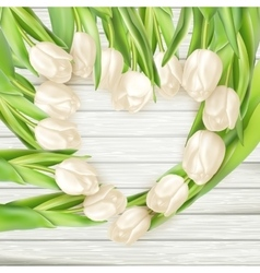 Bouquet white tulips eps 10 vector