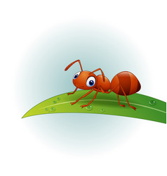 cartoon ant on the leaf vector image