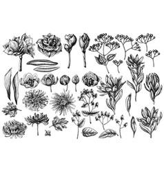 Set hand drawn black and white viburnum vector