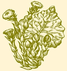 Spring primroses Coltsfoot vector