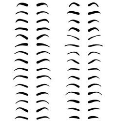 Types of eyebrows vector image