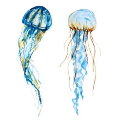 Watercolor jellyfish vector