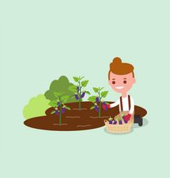 Young gardener harvesting purple eggplant vector