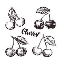 Cherry sketch Fruits vector image vector image