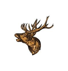 Red Deer Stag Head Roaring Drawing vector image