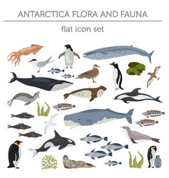antarctic antarctica flora and fauna map flat vector image