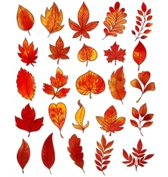 Autumn Foliage Hand Drawn Collection vector image