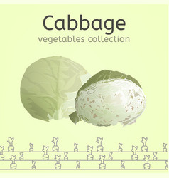 cabbage image vector image