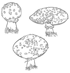 Fly agaric mushroom set vector