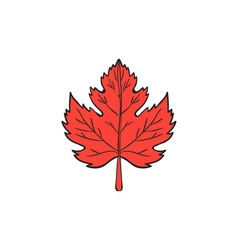 Maple leaf drawing vector
