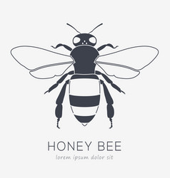 bee logo business icon for your company vector image vector image