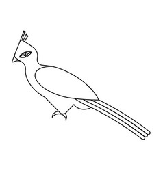 tropical bird tauraco on a white background vector image