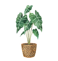 Watercolor clipart with a alocasia in a vector