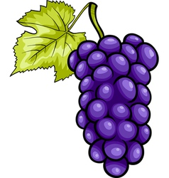 blue grapes fruit cartoon vector image