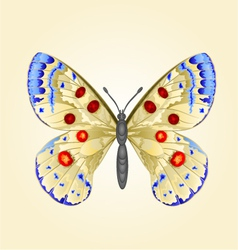 Butterfly parnassius beautiful mountain butterfly vector